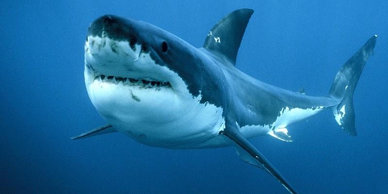 squalo a Messina