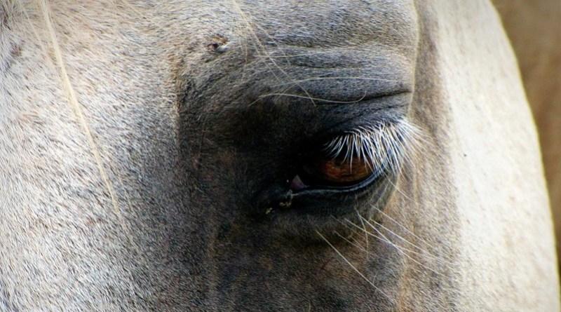 cavalli maltrattati Catania