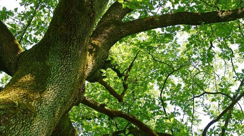 querce tagliate nel Parco di Etna