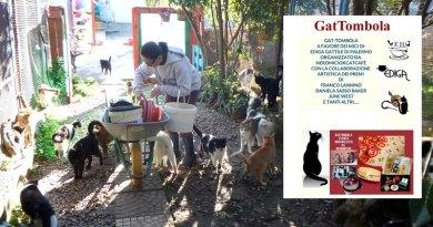 Una GatTombola per aiutare il gattile di Palermo