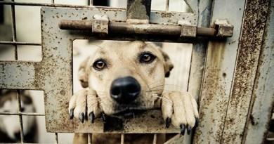 Diffida formale delle associazioni contro il Comune dopo l'aggiudicazione del bando per il trasferimento dei cani in una struttura di Caserta