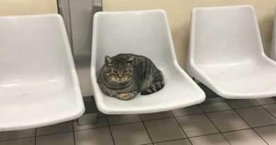 La storia di Romeo, il gatto cacciato via dall'Asl dopo 10 anni