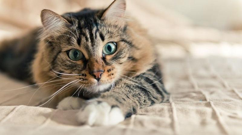 Trapani, 4 mesi di reclusione per aver dato una bastonata a un gatto. Si tratta della condanna più alta mai inflitta in Italia per maltrattamento di animale