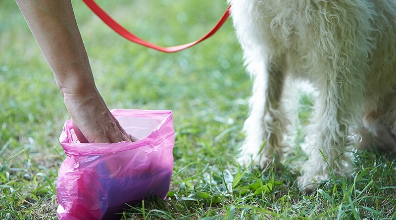 Deiezioni canine, aumentano i controlli a Palermo: da domani in distribuzione i kit per la raccolta delle feci ai proprietari dei cani muniti di microchip