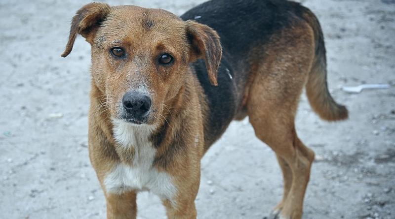 Trapani, cane randagio ucciso a colpi di fucile