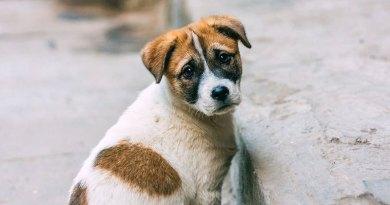Lotta al randagismo in Sicilia, ddl prevede mappatura genetica dei cani e Banca del Dna