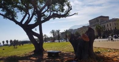 Le immagini albero abbattuto al Foro Italico di Palermo rimandano al tema del corretto rapporto tra Amministrazione e cittadini