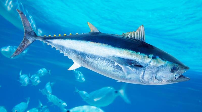 Callipo, annunciata la prima bevanda al gusto di tonno
