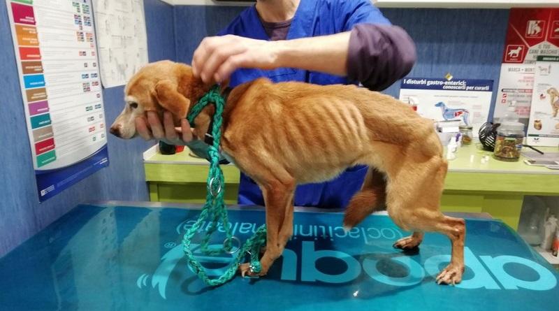 """Le guardie eco-zoofile dell'Oipa salvano un cane rinchiuso in un balcone a Palermo. """"Ecco come segnalarci i casi di maltrattamento di animali"""""""