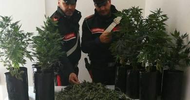 Palermo, piante di marijuana in casa: un arresto