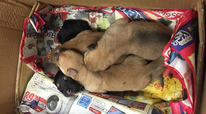 cuccioli abbandonati asp veterinaria Palermo