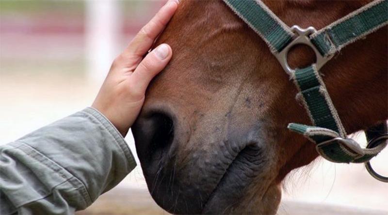 Ippoterapia, uomo e cavallo