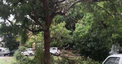 alberi danneggiati, rami spezzati dal vento
