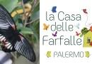 """La """"Casa delle farfalle"""" a Palermo, un paradiso tropicale nei giardini di Palazzo Riso"""