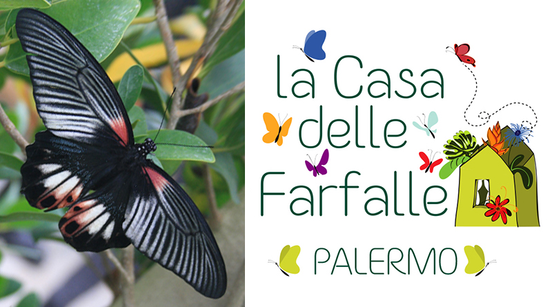Casa delle farfalle a Palermo