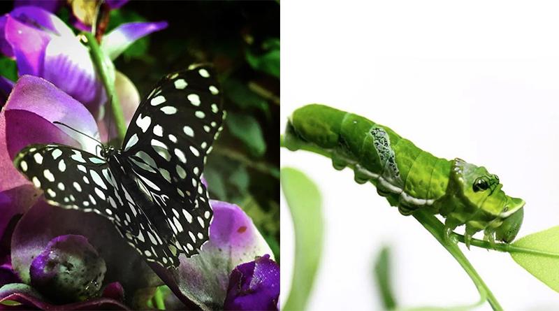 casa delle farfalle