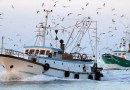 """Basciano, Agci Agrital: """"Da Bruxelles nuova stangata alla pesca siciliana, condannata a sparire"""""""