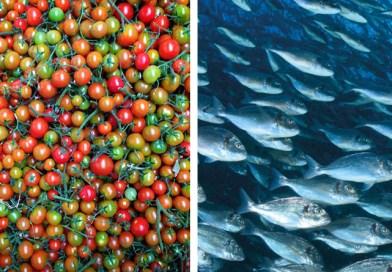 Catastrofe maltempo a Pachino. Distrutti impianti di itticoltura con danni per 16 milioni. Produttori di pomodoro e ortofrutta in ginocchio