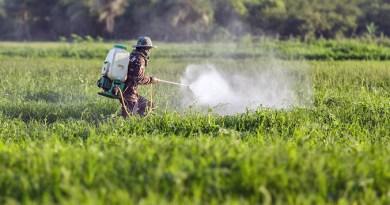 agroecologia, no glifosato