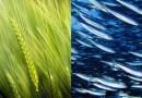 Assemblea cooperative comparto agroalimentare ACI. Il futuro: export, sostenibilità e contrasto al lavoro nero