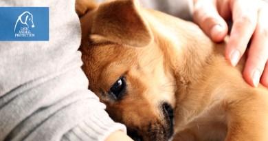 animali non contagiano coronavirus