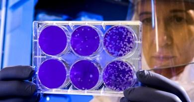 covid-19 covid coronavirus ricerca scientifica sicurezza salute