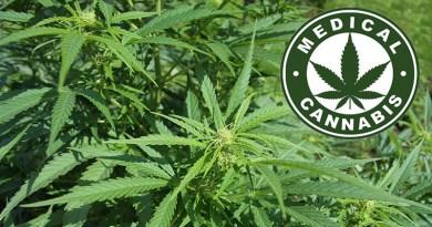 """""""Convegno Cannabis: Pro e Contro"""" a Castelvetrano sulle potenzialità dello sfruttamento della canapa in Sicilia"""