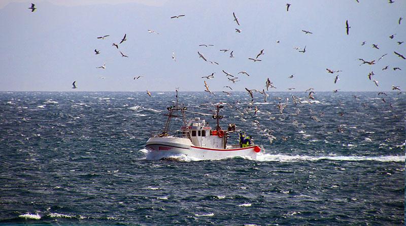 barca da pesca con gabbiani