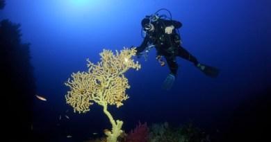 Fondali marini di Ustica