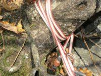 Sosta S1 su tronco d'albero e fettuccia original '87