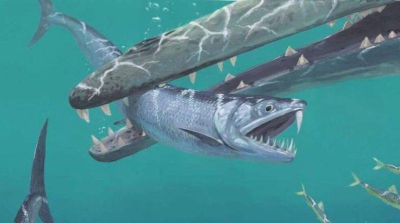 Antica acciuga catturata da una balena