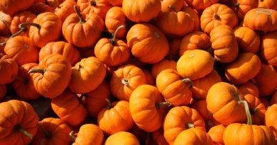 Zucca: 6 curiosità che (forse) non sapevi sul simbolo di Halloween