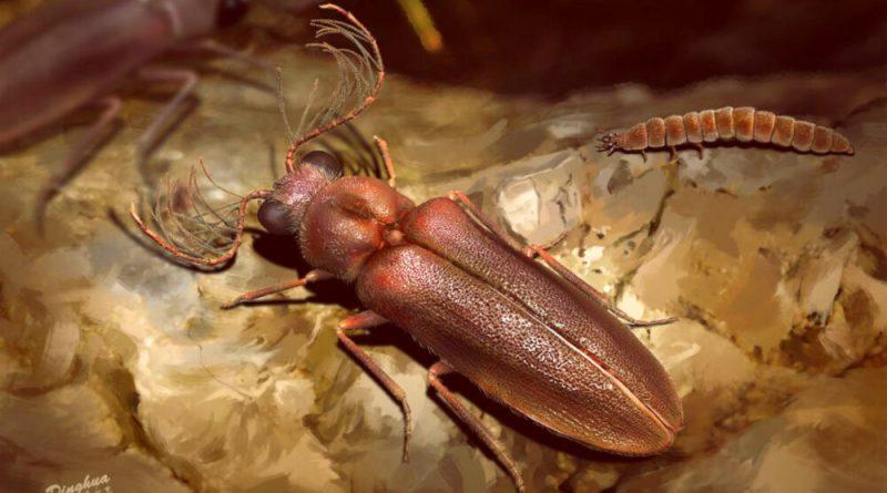 Il Cretophengodes azari, antenato delle lucciole