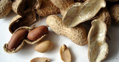 Gusci di arachidi