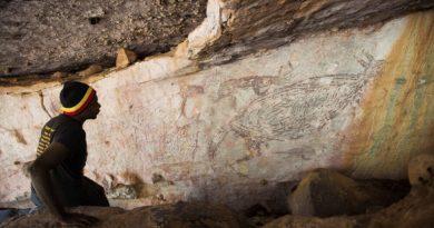 Il canguro della grotta di Balanggarra
