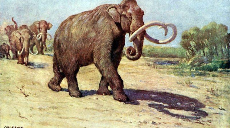 Mammut lanoso colombiano