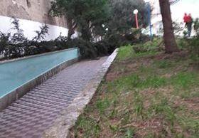 Caduto un albero in una scuola, preoccupazione tra i genitori