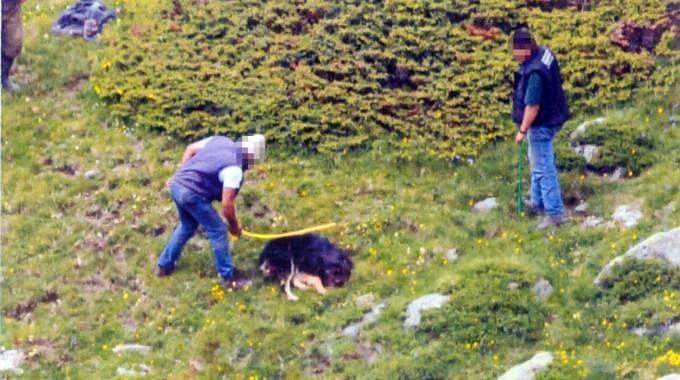 Il cane ucciso a bastonate (foto Ansa)