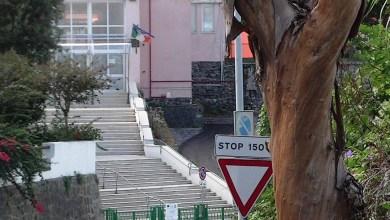 Photo of Eucalipti secchi a Via Cartaromana,la denuncia di Savio