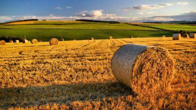Photo of Agricoltura, Coldiretti: 20mila posti di lavoro per i giovani