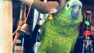 """Photo of Appello per """"Totò"""", il pappagallo scappato"""