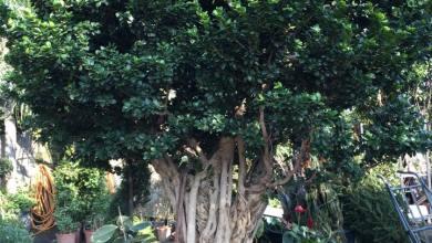 Photo of Inizia la sottoscrizione per l'acquisto dell'albero per Chiara