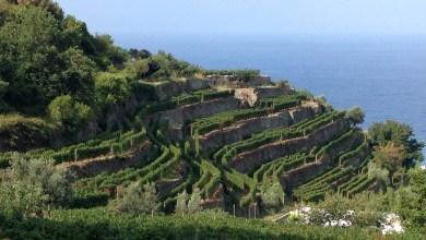 Photo of III° Incontro Mondiale sui paesaggi terrazzati, Ischia tra le sedi del meeting