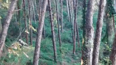 Photo of Sull'isola è guerra aperta ai bracconieri