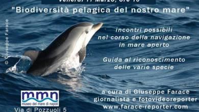 Photo of Biodiversità pelagica nel Golfo di Napoli