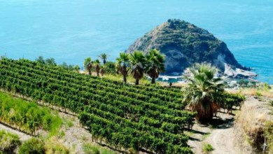 Photo of VinArch 2016, a Villa Arbusto  paesaggi e architetture del vino