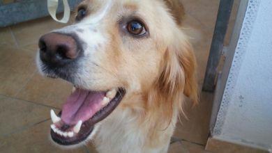 Photo of Casamicciola, ritrovato un cane al Cretaio