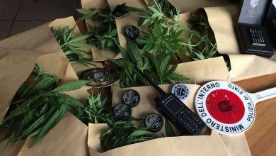 Photo of Polizia in azione col cane antidroga, sequestrate otto piante di marijuana