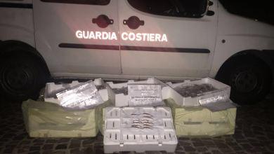Photo of Pesca abusiva, operazione della guardia costiera a Procida