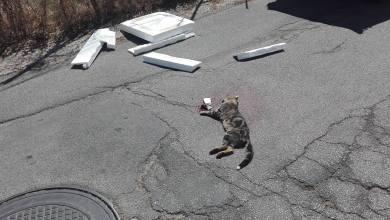 Photo of «Gatto avvelenato, a Ischia nessun veterinario disponibile a visitarlo»